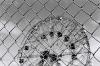 Coney Island - ferris wheel